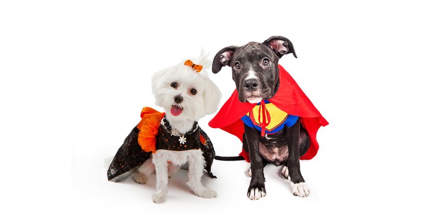 Pawlished Paws 14th Annual Howl'O Ween  Costume Contest thumbnail image